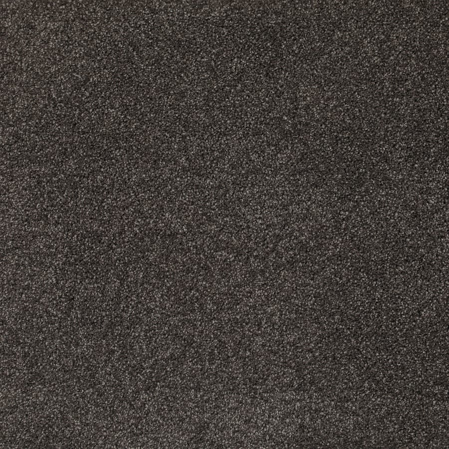SDN Solutions Studio 4 metre wide Polished Carpet available at McKenzie & Willis